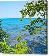 Birch Trees Above Lake Superior Off North Country Trail In Pictured Rocks National Lakeshore-mi Canvas Print
