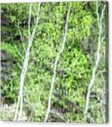 Birch Trees Abstract Canvas Print