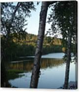 Birch Trees Along The Lake Canvas Print