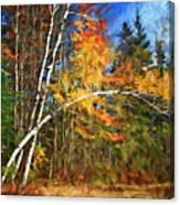 Birch Trees - Autumn Canvas Print