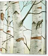 Birch Trees In Late Autumn Canvas Print