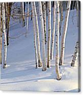 Birch Trees In The Snow, South Canvas Print