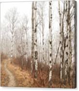 Birch Walk Canvas Print