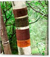 Birch Wood Tree  Canvas Print