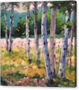 Birches 04 Canvas Print