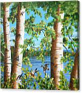 Birches Along The Androscoggin River Canvas Print