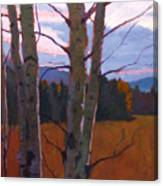 Birches At Twilight Canvas Print