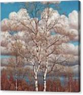 Birches In The Spring Canvas Print