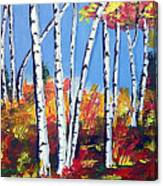 Birches Canvas Print