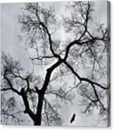 Bird And Tree Canvas Print
