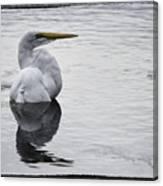 Bird Bath 4619 Canvas Print