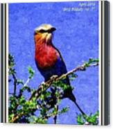 Bird Beauty - No. 7 P A With Decorative Ornate Printed Frame. Canvas Print