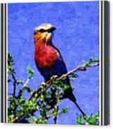 Bird Beauty - No 7 P B With Decorative Ornate Printed Frame. Canvas Print