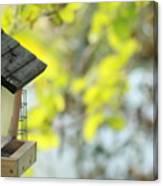 Bird Feeder Canvas Print