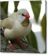 Bird Gazing Canvas Print