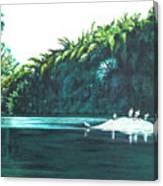 Bird Haven Canvas Print