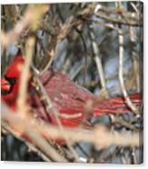 Bird In A Bush Canvas Print