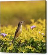 Bird in a Garden Canvas Print