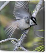 Bird In Action 2 Canvas Print