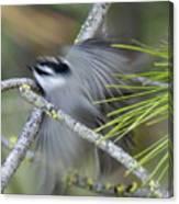 Bird In Action Canvas Print