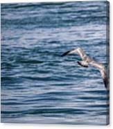 Bird In Flight Over Water Canvas Print