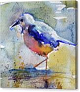 Bird In Lake Canvas Print