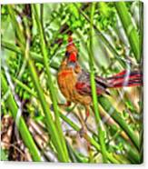 Bird In The Brush H D R Canvas Print