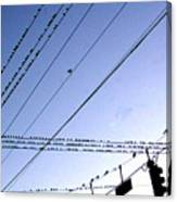 Bird Invasion Canvas Print