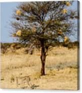 Bird Nests And A Cheetah Canvas Print