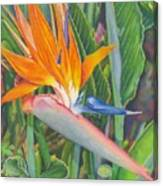 Bird O Paradise Canvas Print