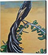 Bird Of Beauty, Ngiculela Canvas Print