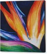 Bird Of Paradise 1 Canvas Print