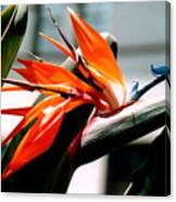 Bird Of Paradise 2 Canvas Print