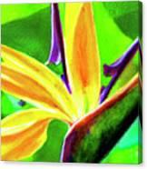 Bird Of Paradise #262 Canvas Print