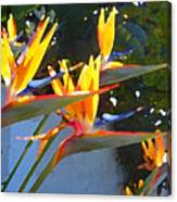 Bird Of Paradise Backlit By Sun Canvas Print
