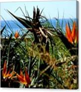 Bird Of Paradise By The Sea Canvas Print