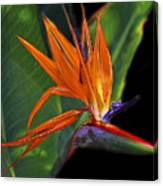 Bird Of Paradise Digital Art Canvas Print