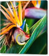 Bird Of Paradise Gecko Canvas Print