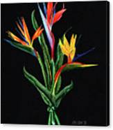 Bird Of Paradise In Black Canvas Print
