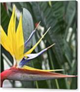 Bird Of Paradise Longwood Gardens Canvas Print