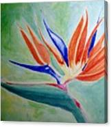 Bird Of Paradise, Noon Canvas Print