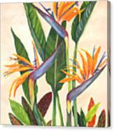 Bird Of Paradise Canvas Print
