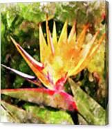 Bird Of Paradise Wc Canvas Print