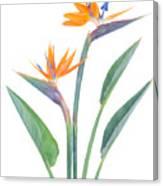 Bird Of Paradize Flowers Canvas Print