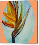 Bird Of Paridise Canvas Print