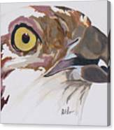 Bird Of Prey  Osprey Canvas Print