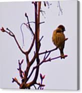 Bird On A Bud Canvas Print