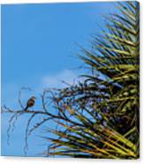 Bird On A Palm Branch Canvas Print