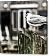 Bird On A Pole Canvas Print
