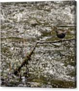 Bird On A River Canvas Print